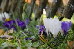 Blumen in der Blüte Stockfoto