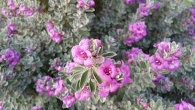 Blumen in der Blüte Lizenzfreie Stockbilder