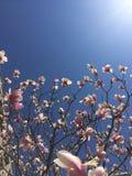 Blumen in der Blüte Stockfotos