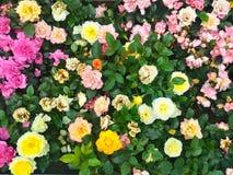 Blumen in der Blüte Lizenzfreies Stockbild