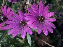 Blumen in der Blume Lizenzfreies Stockbild