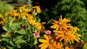Blumen in der Brise am sonnigen Tag stock footage