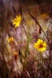 Blumen der Düne Lizenzfreie Stockbilder