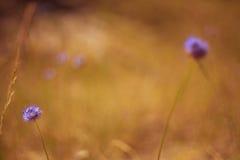 Blumen der Düne Stockfotos