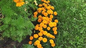 Blumen an der Datscha stock video