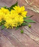 Blumen der gelben Farbe Lizenzfreie Stockbilder