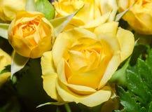 Blumen der gelben Rosen schließen oben, Beschaffenheit, Blumengesteck Stockfotos