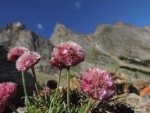 Blumen in der Höhe Lizenzfreie Stockfotografie