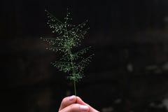 Blumen in der Hand Lizenzfreie Stockfotografie