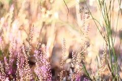 Blumen in der Heide Lizenzfreie Stockfotos