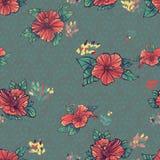 Blumen der Hibiscuse. Polkapunkt Stockfotografie