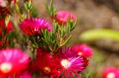 Blumen in der Insel von Sao Miguel stockfoto