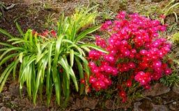 Blumen in der Insel von Sao Miguel stockfotografie