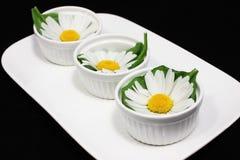 Blumen der Kamille Lizenzfreie Stockfotografie