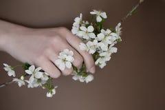 Blumen der Kirsche in den Händen Stockfotografie