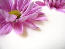 Blumen in der Milch Stockbilder