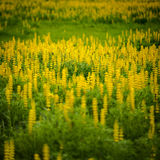 Blumen in der Natur Lizenzfreie Stockfotografie