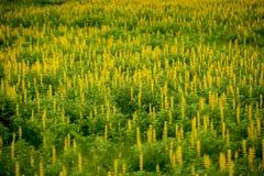 Blumen in der Natur Stockbild