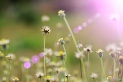 Blumen in der Sonne Lizenzfreie Stockfotos
