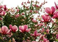Blumen in der Sonne Lizenzfreies Stockfoto
