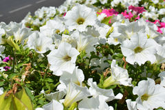 Blumen in der Stadt Stockbild