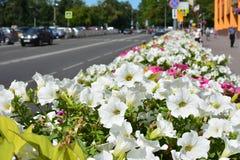 Blumen in der Stadt Lizenzfreies Stockbild