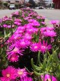 Blumen in der Stadt Stockfoto
