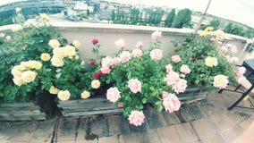 Blumen in der Terrasse Stockbild