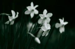 Blumen der Traurigkeit Stockfotografie