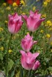 Blumen der Tulpe lizenzfreie stockfotografie