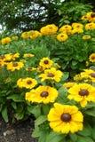 Blumen in der Universität von Cambridge Lizenzfreie Stockfotografie