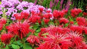 Blumen in der Universität von Cambridge Lizenzfreies Stockbild