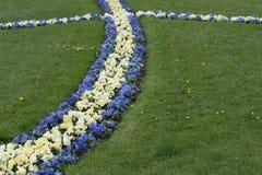 Blumen der Veilchen im Garten von Mirabel Stockfotos