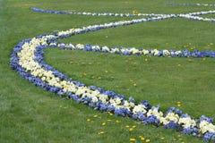 Blumen der Veilchen im Garten von Mirabel. Stockfotografie