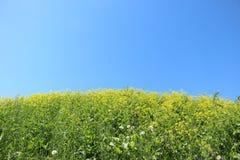 Blumen in der Wiese Lizenzfreies Stockfoto