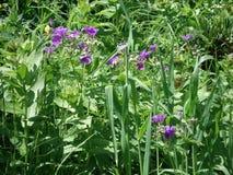 Blumen der Wiese Stockbilder