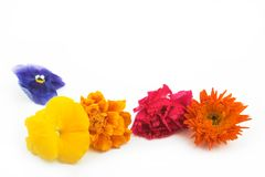 Blumen in der Zeile lizenzfreies stockbild