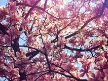 Blumen des Adels Stockbild