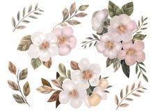 Blumen des Apfels und der Kirsche auf einem weißen Hintergrund stockfoto