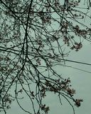 Blumen des Baums Lizenzfreies Stockbild