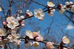 Blumen des Baums Lizenzfreie Stockfotos