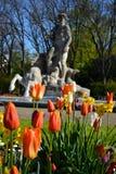 Blumen des botanischen Gartens Stockbilder