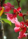 Blumen des Frühlinges lizenzfreies stockbild