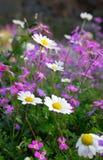 Blumen des Frühlinges stockfotografie