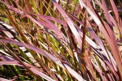 Blumen des Grases Stockbilder