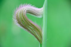 Blumen des Grases Stockfotos