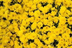 Blumen des Herbstes Lizenzfreie Stockbilder
