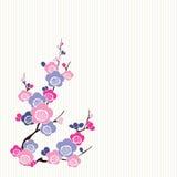 Blumen des japanischen Rosas und des Blaus Stockfoto