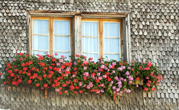 Blumen des Rotes und des Rosas Stockfotos