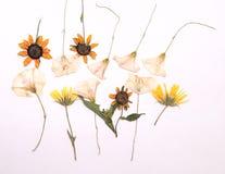 Blumen des Sommers Stockfotos